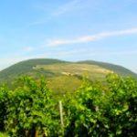 Erlau- Heimat des Stierblutes