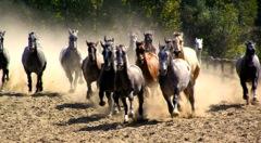 Pferde in der Pussta