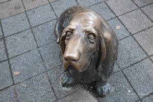 Hund von Colombo