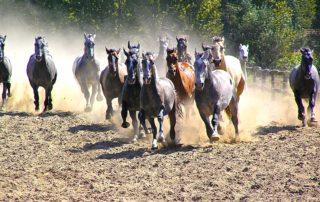 Pussta mit Pferden